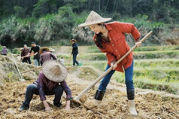 Hậu ly hôn, Triệu Lệ Dĩnh về quê làm cô thôn nữ 'miệt mài cuốc đất'