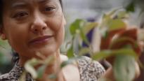 'Cây táo nở hoa' tập 66: Fan mừng rơn vì cây táo nhà Ngọc đã nở hoa…