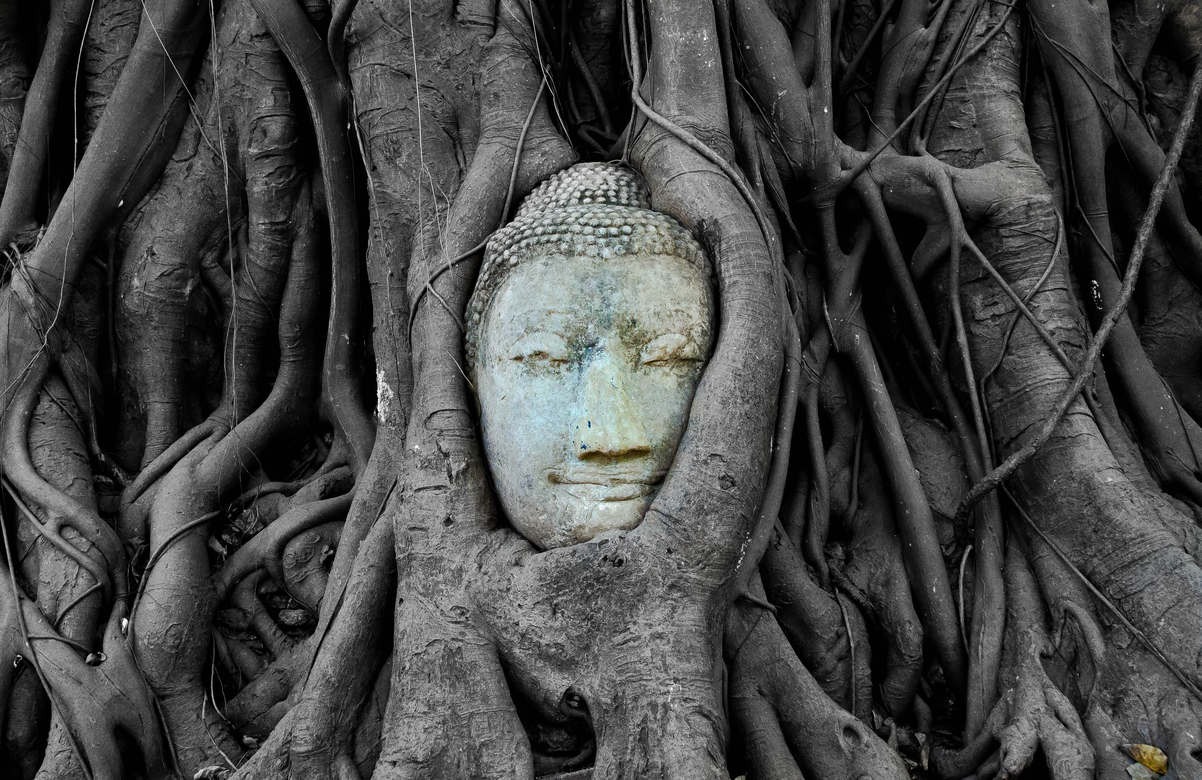 ayutthaya ve dep dieu tan day suc song