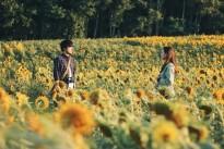 LHP quốc tế Hà Nội lần thứ V: Bữa tiệc phim đặc sắc
