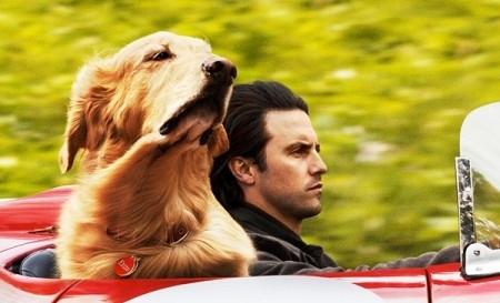 Câu chuyện tình cảm gia đình đầy thú vị qua góc nhìn của một chú chó trong 'Cuộc đời phi thường của chú chó Enzo'